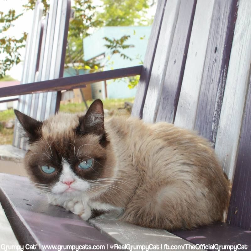 Pin by Angelique D on Grumpy Cat