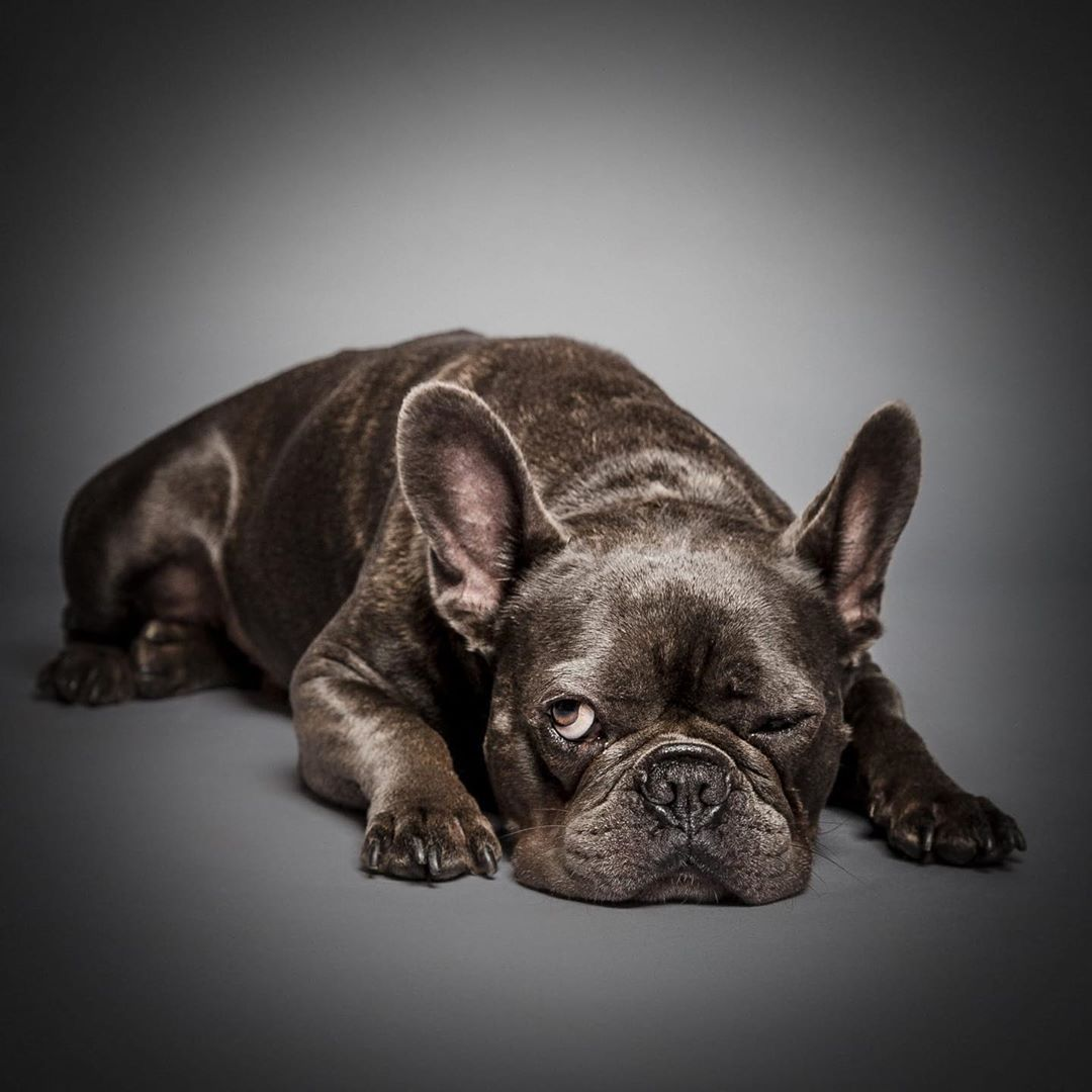 We Recently Had This Little Guy In The Studio And Just Loved