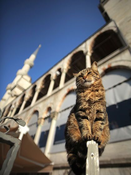 Aha, welcome to my domain!  Sultanahmet Camii & cat - Istanbul