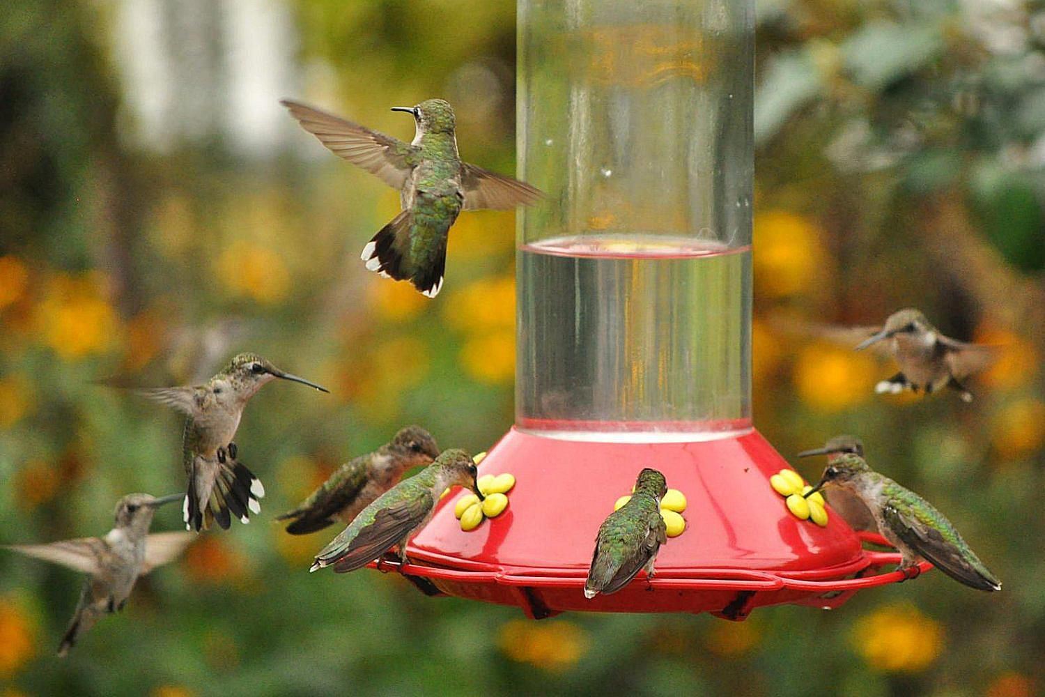 Where Is the Best Place to Hang Hummingbird Feeders