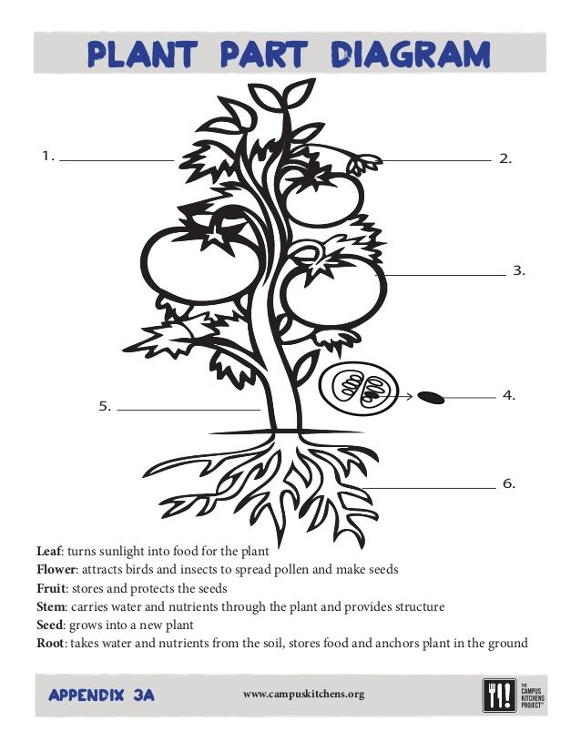Parts Of A Vegetable Plant And Their Functions Worksheet Google