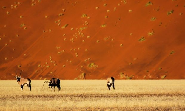 A bright orange landscape of the Namib Desert with Oryx antelope in the foreground in Soussusvlei, Namibia.