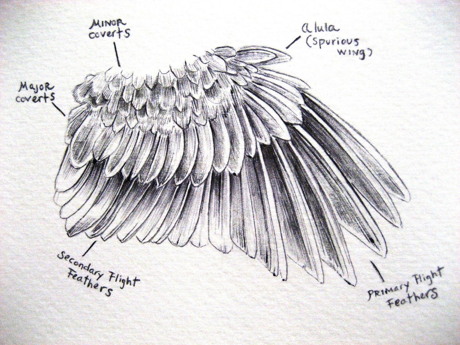 How to draw bird feather quickly and beautifully