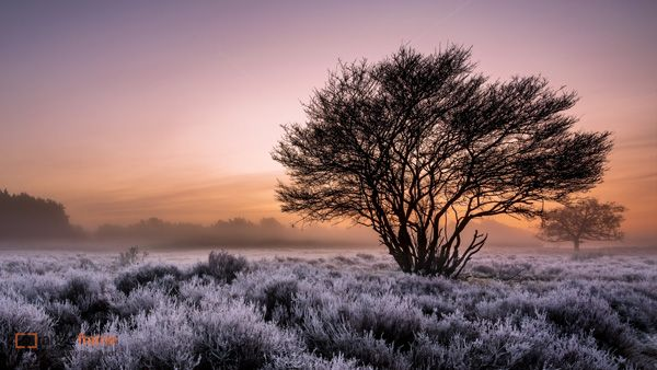 frosty morning on the heath by remco-bosshard - 65+ Awesome Winter Landscape Photos  <3 <3