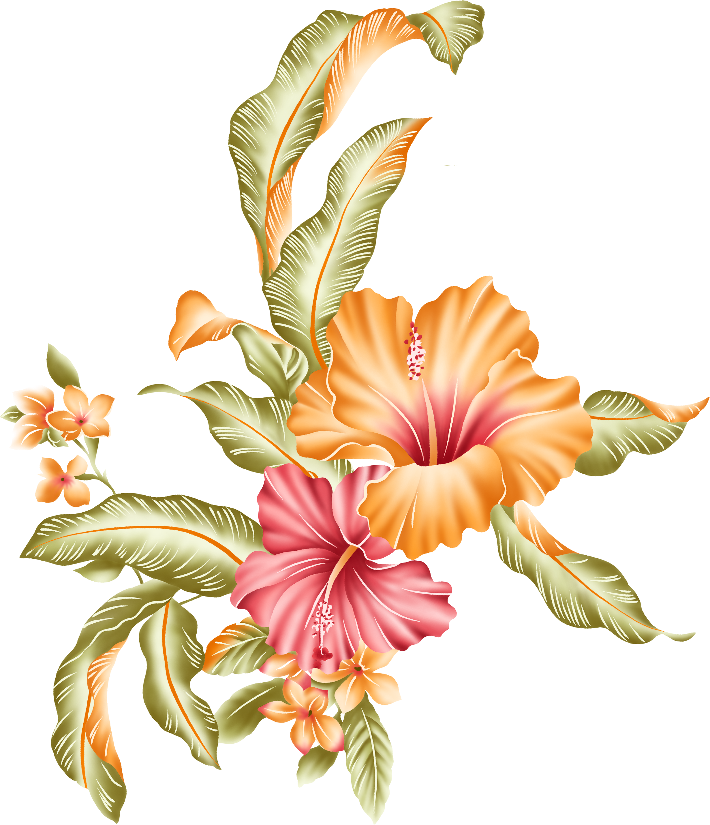 Цветы картинки рисунки на прозрачном, свадебному торжеству