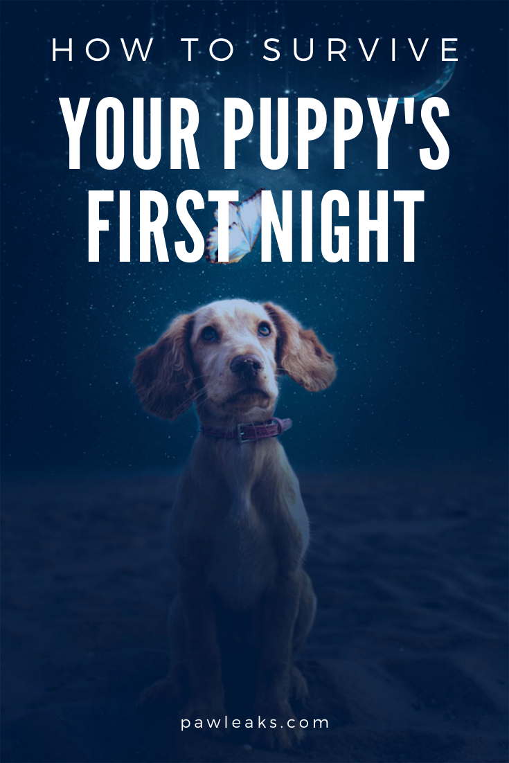 How To Survive Your Puppy S First Night At Home Pawleaks In 2020 First Night With Puppy Sleeping Puppies Crate Training Puppy