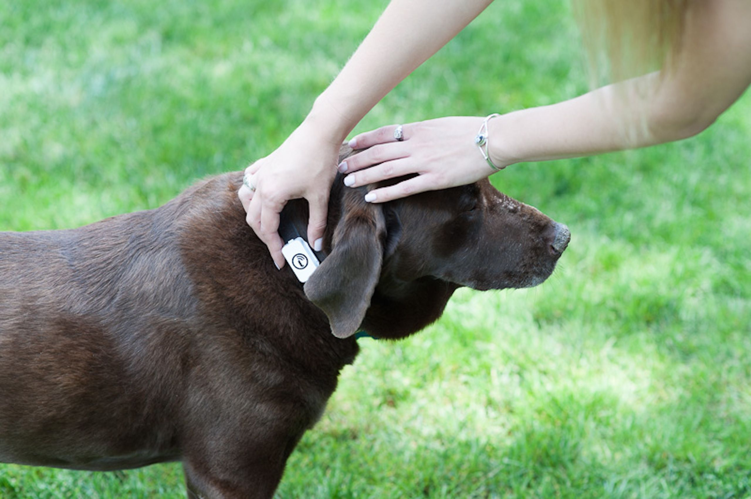 The Iota Is The Only Gps Pet Tracker Without Monthly Fees Set Up A Geofence