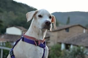 Adopt Copito On Animals Pet Organization Animal Rescue