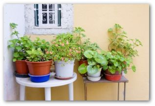 Vegetable Container Gardening - Getting Started | Vegetable garden on potted garden ideas, container gardening design, container herb garden design,