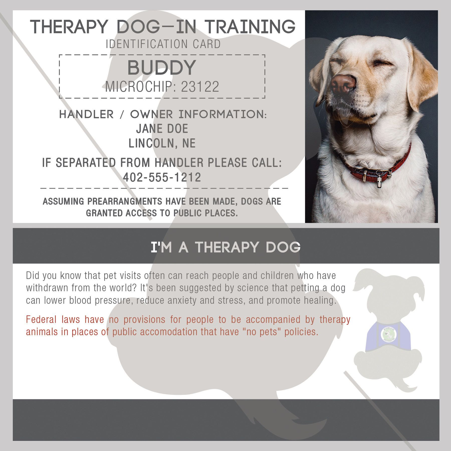 Id Card Therapy Dog In Training Therapy Dogs Service Dogs