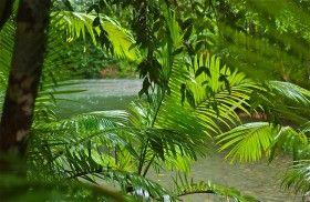 Fronded frame; Daintree Rainforest; Cape Tribulation Wilderness; Queensland, Australia.  January 2014.