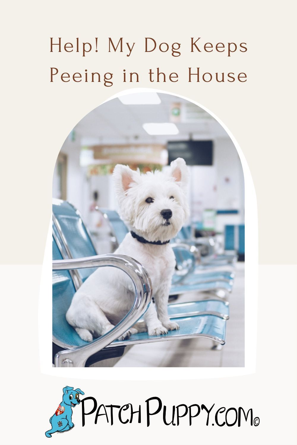 Help My Dog Keeps Peeing In The House Patchpuppy Com In 2021 Dog Pee Dog Behavior Training Dog Behavior