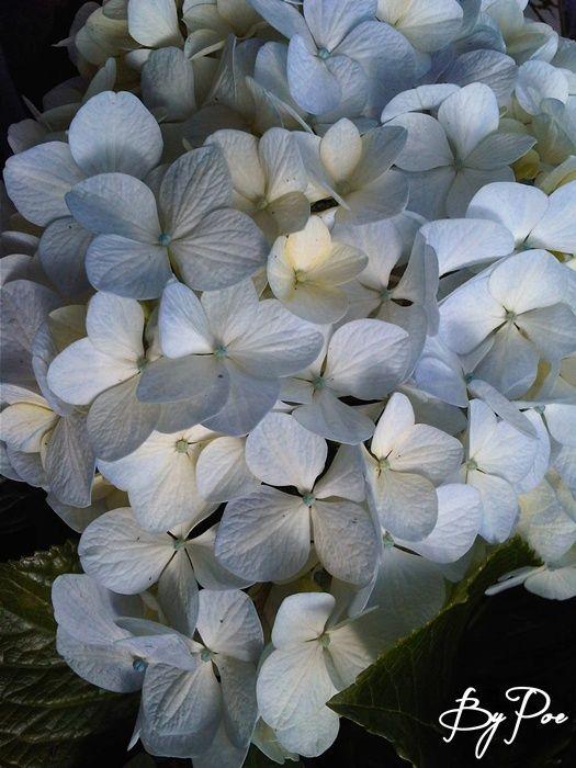 Gambar Bunga 3 Bulan