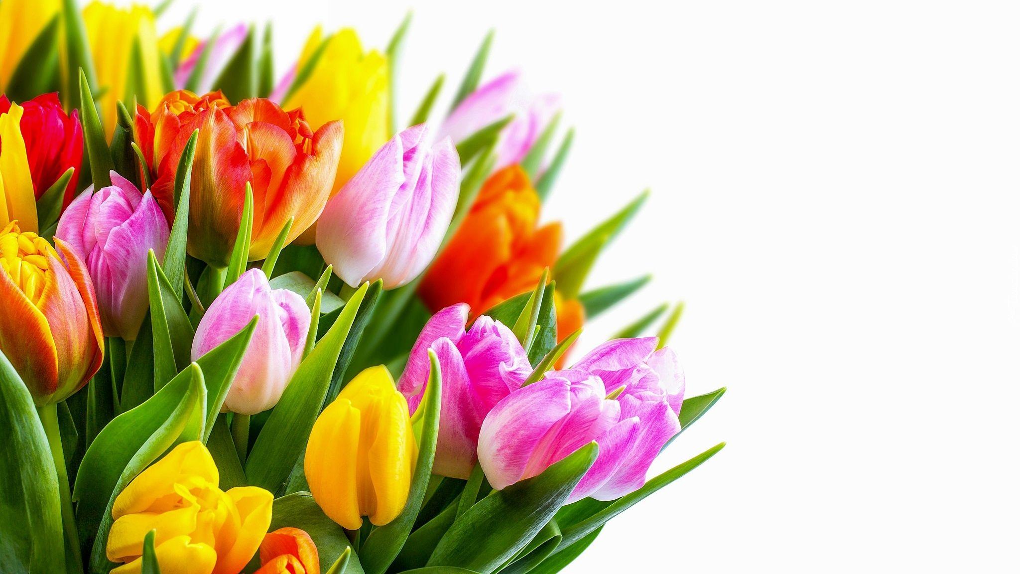 Kwiaty Bukiet Kolorowe Tulipany Biale Tlo Beautiful Flowers Wallpapers Beautiful Flowers Spring Flowers