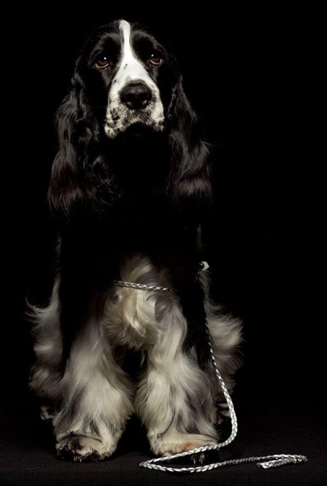 Pin By Debbie Davis On Sobaki Rare Dog Breeds Cocker Spaniel I Love Dogs
