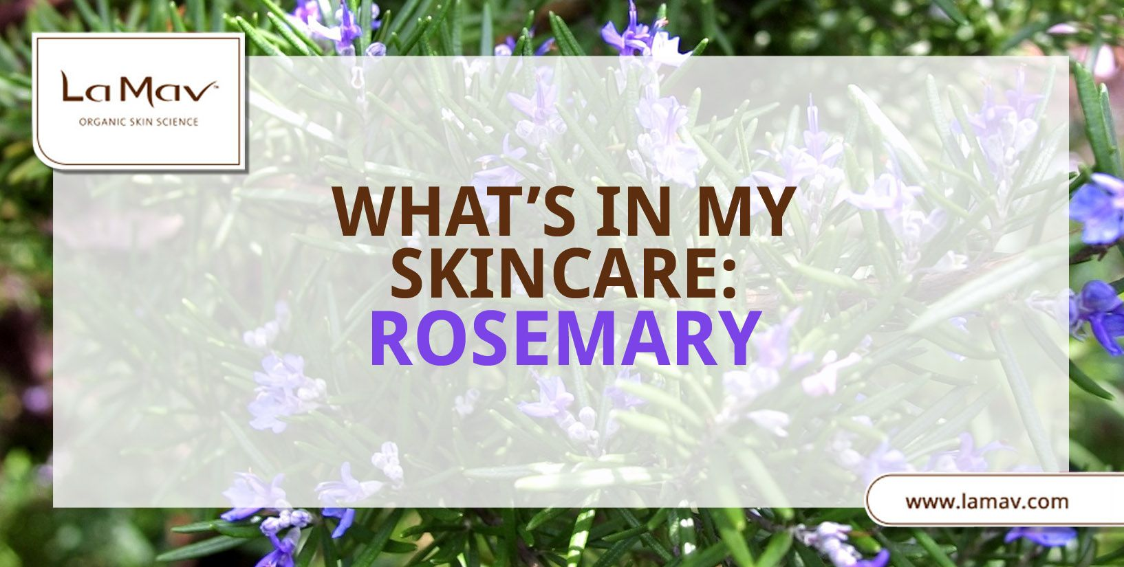 Rosemary is not just an aromatic plant that makes your dishes incredibly delicious. It's a magical plant that can do wonders for your skin!