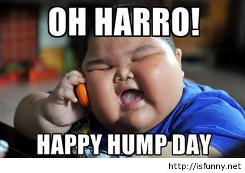 Funny Meme Good Day : Hump day pics funny camel jokes pics sumo things that make me