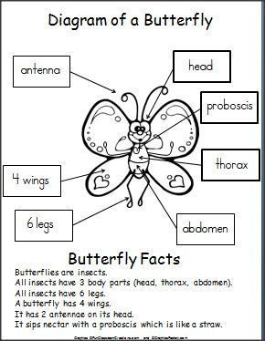free printable butterfly diagram for kids pinterest printable rh pinterest com Monarch Butterfly Diagram Simple Butterfly Diagram