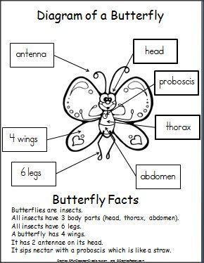 free printable butterfly diagram for kids preschool. Black Bedroom Furniture Sets. Home Design Ideas