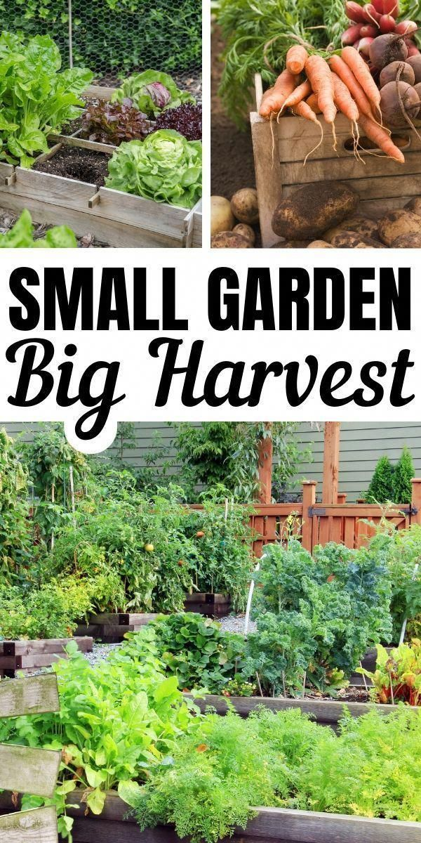 How to Grow Lots of Veggies in a Small Space