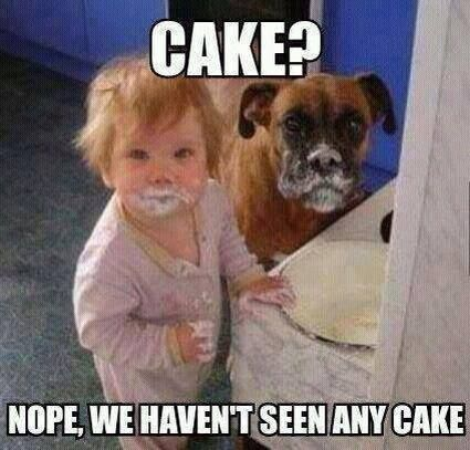Cake Funny Baby And Dog Meme Funny Babies Funny Animal