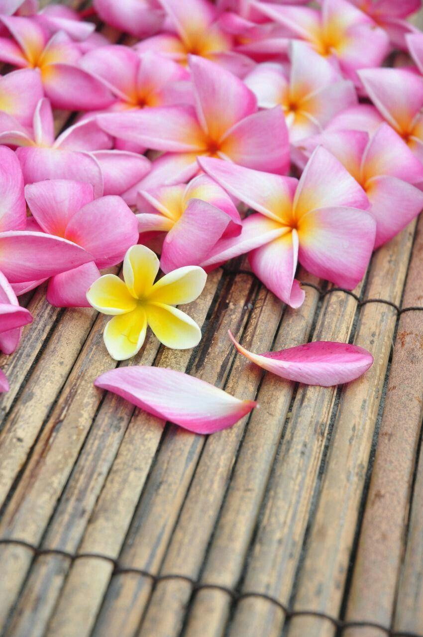 ورد خلفيات ورود جميلة جدا Create Your Own Card Flowers Create Yourself