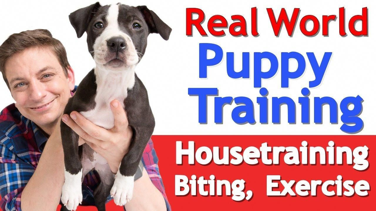 Simply Click The Link To Read More About Dog Training 101 You Must Take Your Older Pet Towards The V Puppy Training Training Your Puppy House Training Puppies