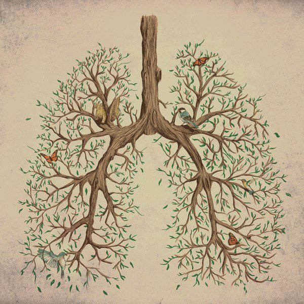 lungs as trees, bronchial branches | Lungs art, Anatomy art, Art