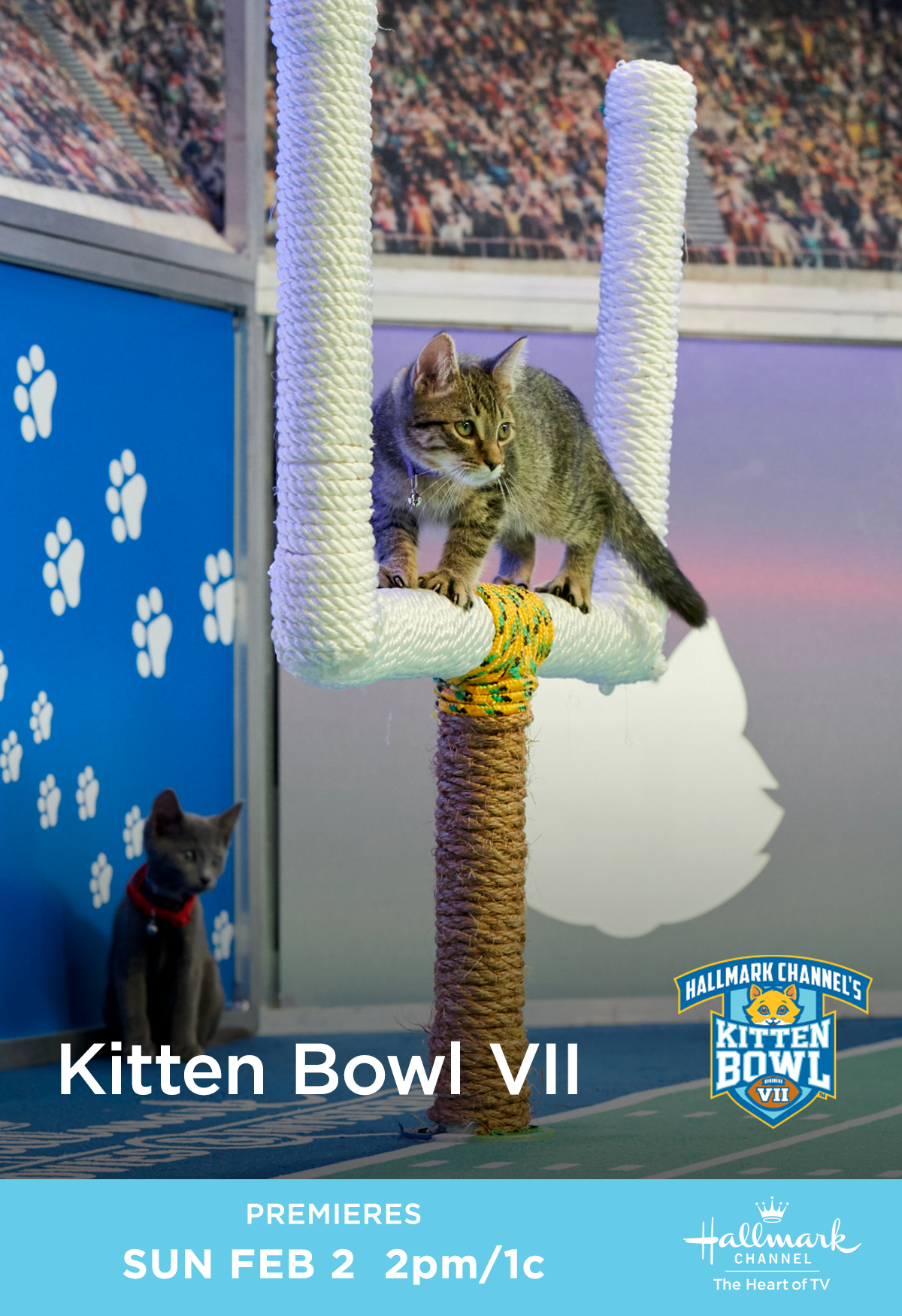 The Funniest And Cutest Catletes Will Take Stage On February 2 For Kitten Bowl Vii Tune In For All The Action Only On Hal Kitten Bowls Kitten Kittens Cutest