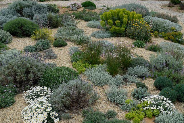Planting Design Gardens Dry on planting a garden, drought tolerant landscape design, modern planting design,