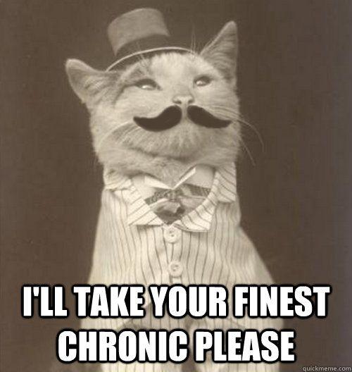 chronic cat   #marijuana #cannabis #mmj