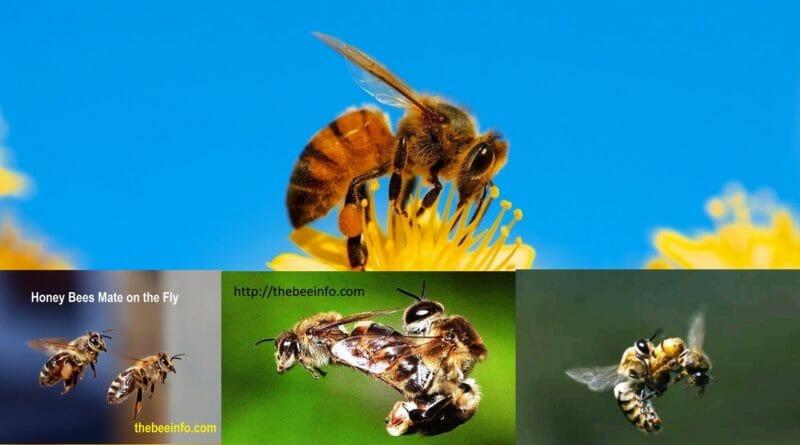 Pin by Gunjan Jain on Bee in 2020 Drone bee, Bee, Male bee