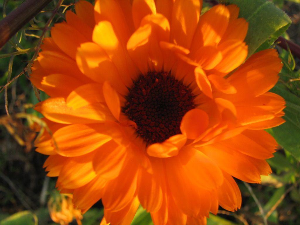 Aster Flowers www.facebook.com/flowerofworld www.flowerhomes.blogspot.com