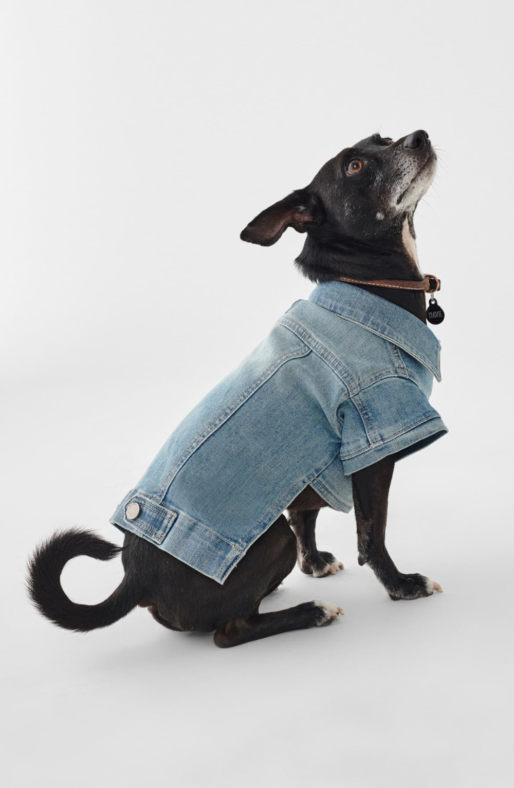 Pin On Dogs With Style [ 1533 x 1000 Pixel ]