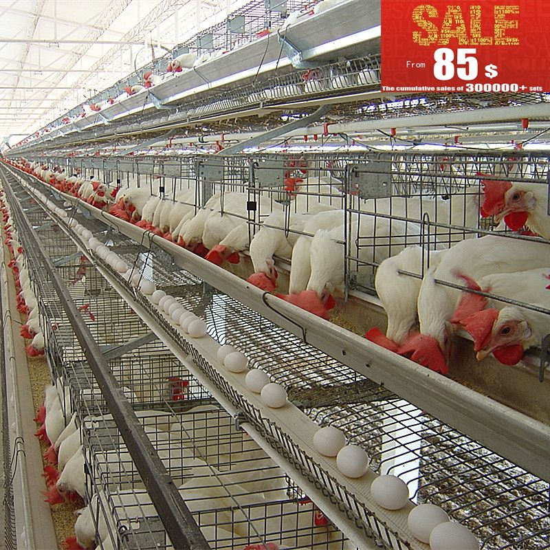 Good quality chicken cage for sale in philippines