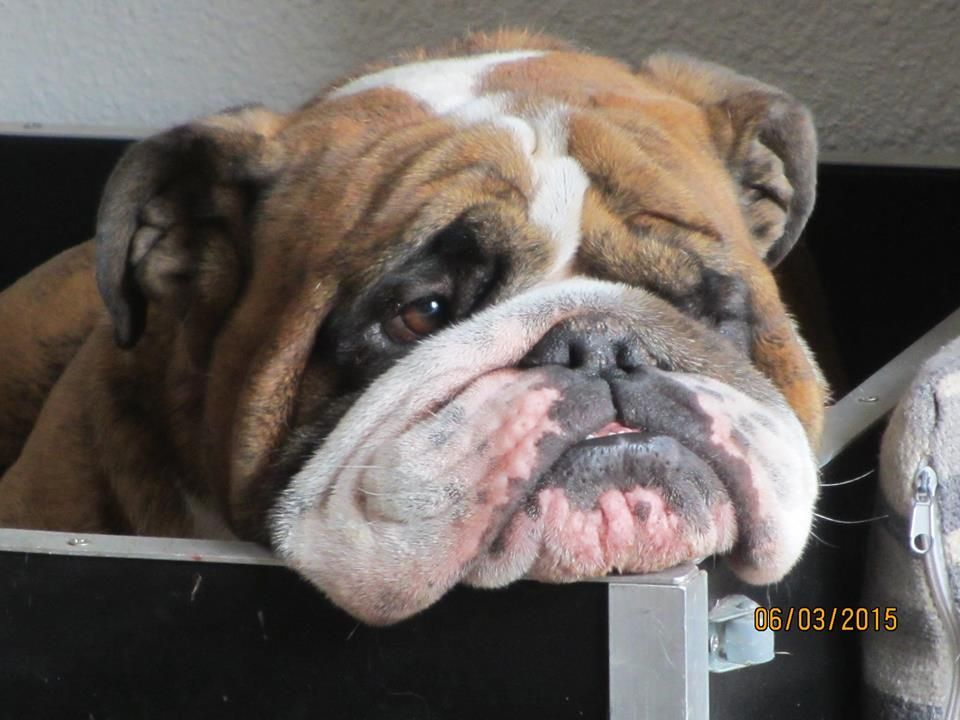 Handsome Bully Mug OMGosh! I just want to kiss that face
