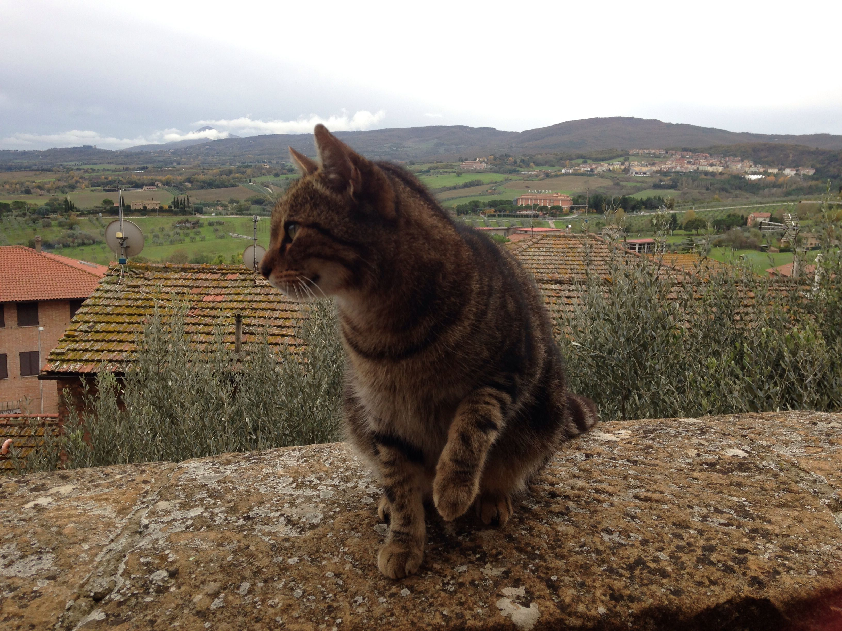 Cat in Chianciano