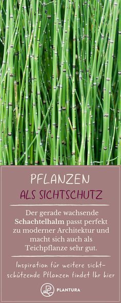 Pflanzen als Sichtschutz für Garten & Balkon - Plantura