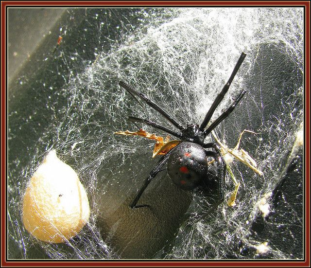 We found this large spider and egg sac on the side of a