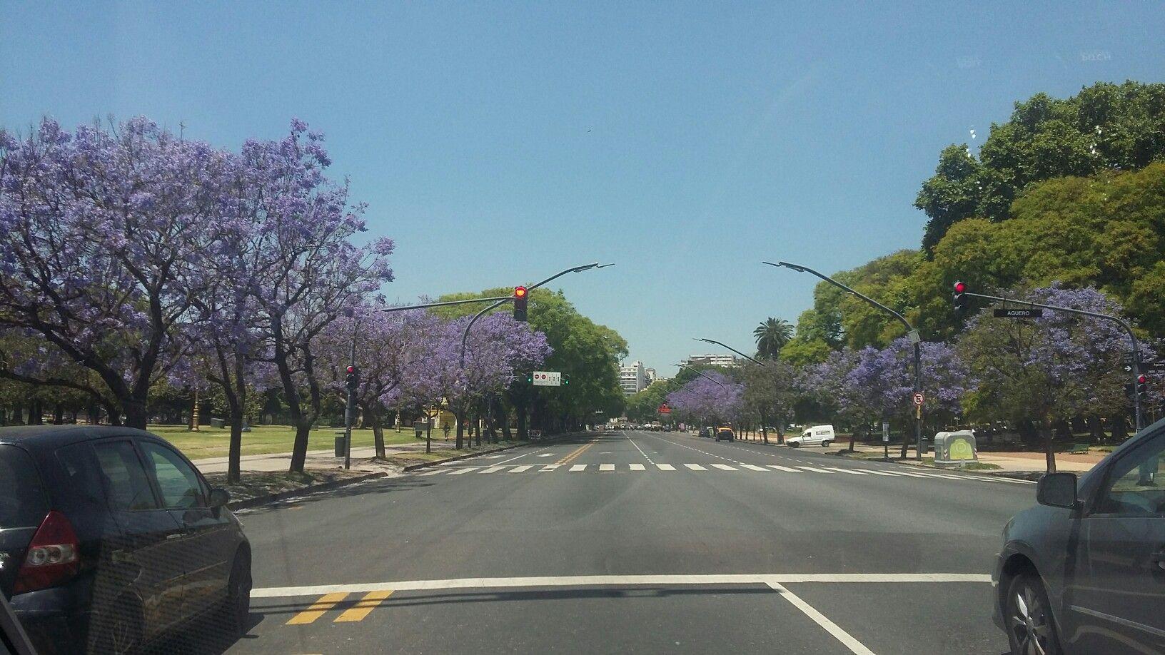 Buenos Aires se torna lila en primavera