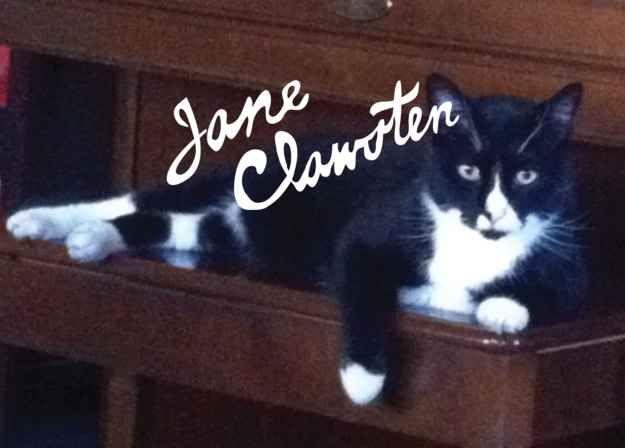 21  Jane Clawsten | Cool Cats | Boy cat names, Cat pun names