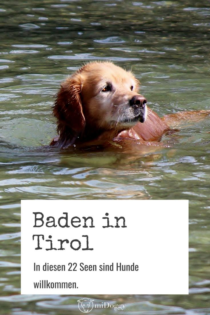 Baden Mit Hund In Tirol Bei Diesen 22 Seen Sind Hunde Willkommen Hunde Urlaub Mit Hund Welpen