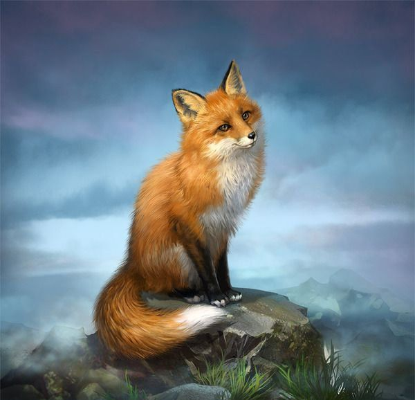 35 Lovely Fox Pictures Fox pictures, Fox, Cute fox