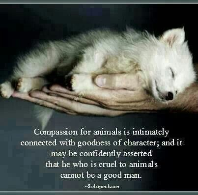 Compassion for animals