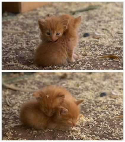 Okay, I might need to get two ginger kittens when we move.