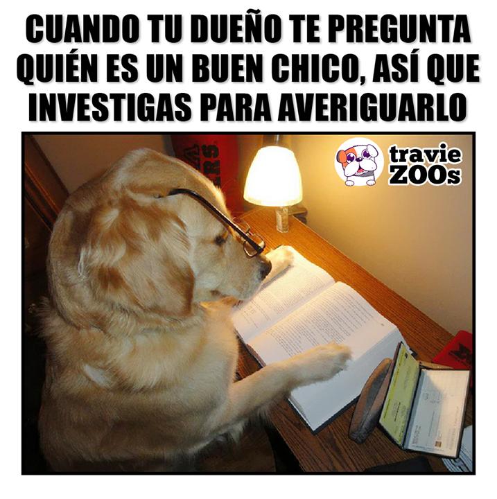 Me Parece Que Yo Pero Voy A Checar Mis Fuentes Memes Perros Amor De Perro Perros Graciosos