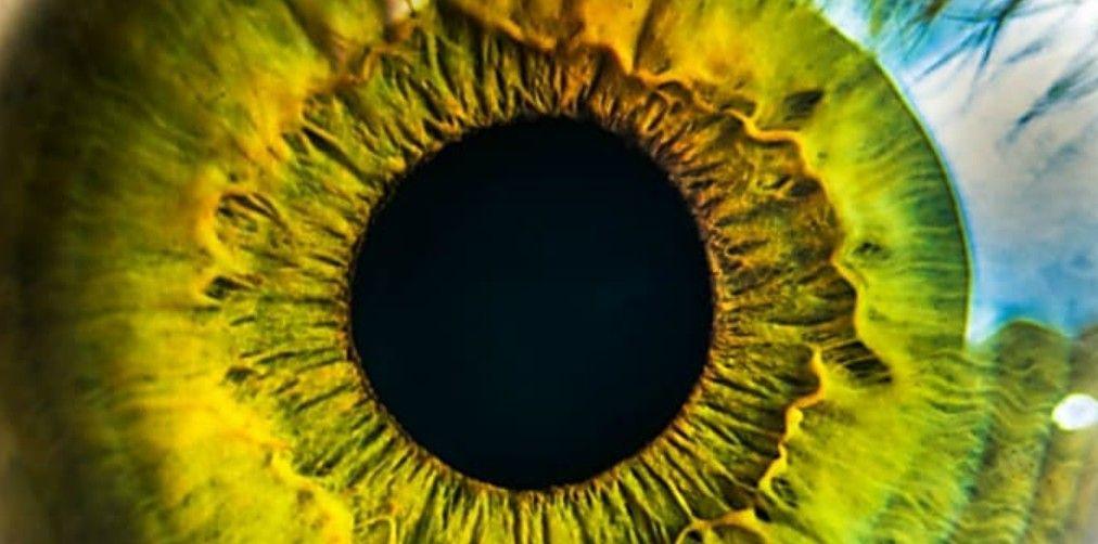 Human eye eye exercises eye facts health awareness