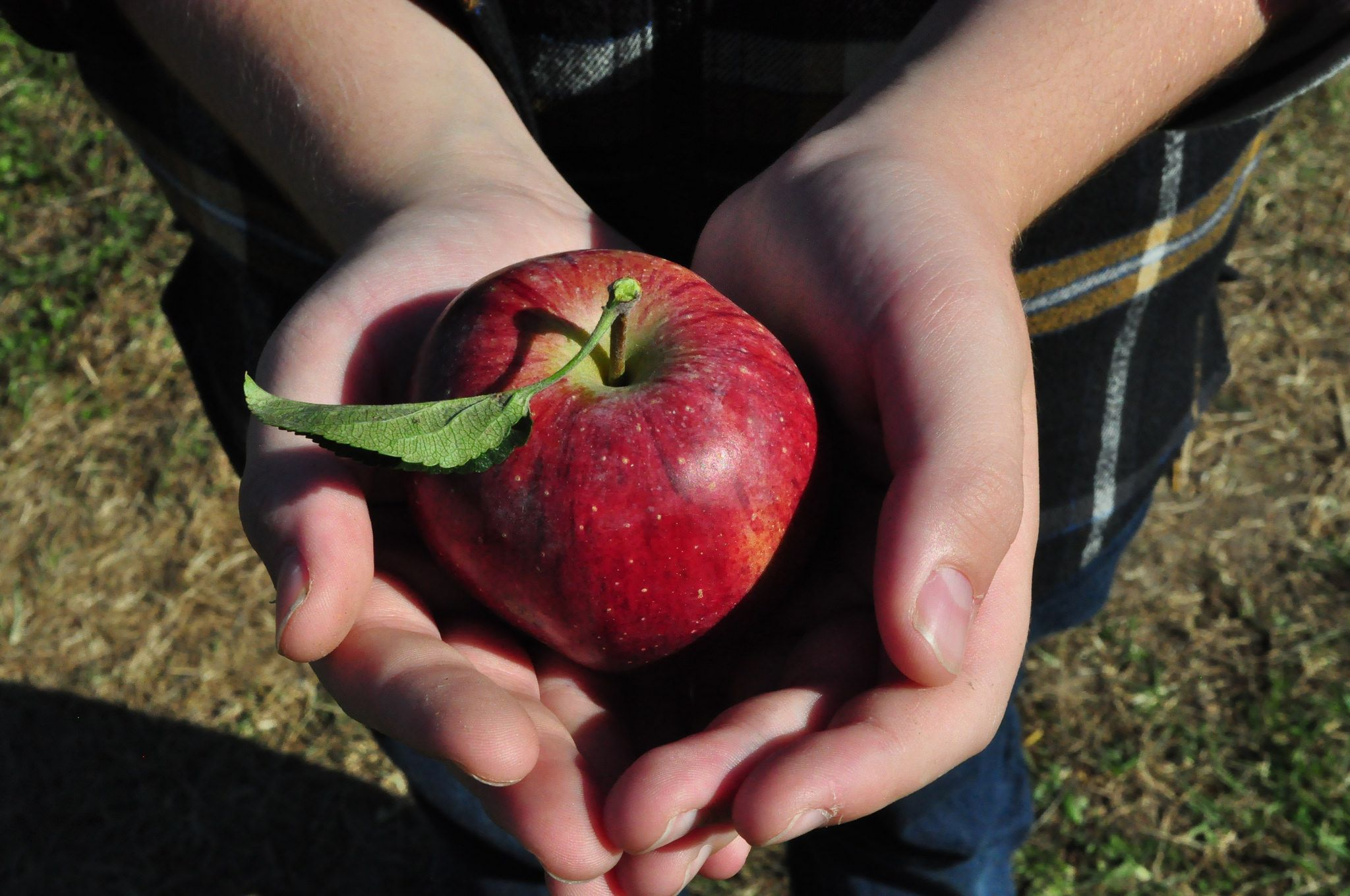 Fall in where to pick your own apples near nyc u pick