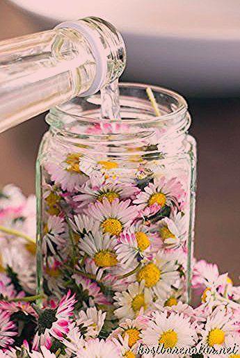 Photo of Gänseblümchen-Tinktur – gegen Akne, Mitesser und unreine Haut – Kostbare Natur