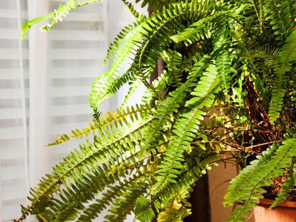 Schlafzimmer Pflanzen ~ Diese pflanzen solltest du im schlafzimmer haben pflanzen